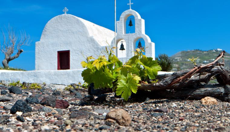 Vineyards in Santorini, Greece